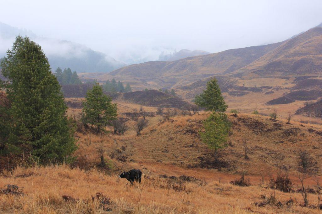 mechuka scenery