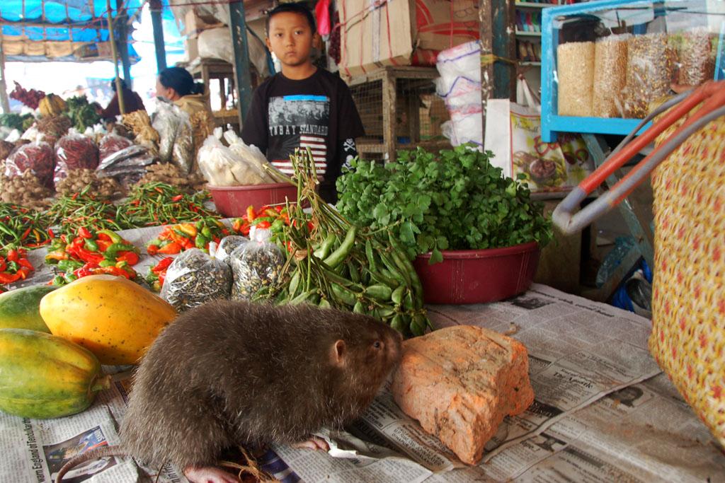 rat kohima market
