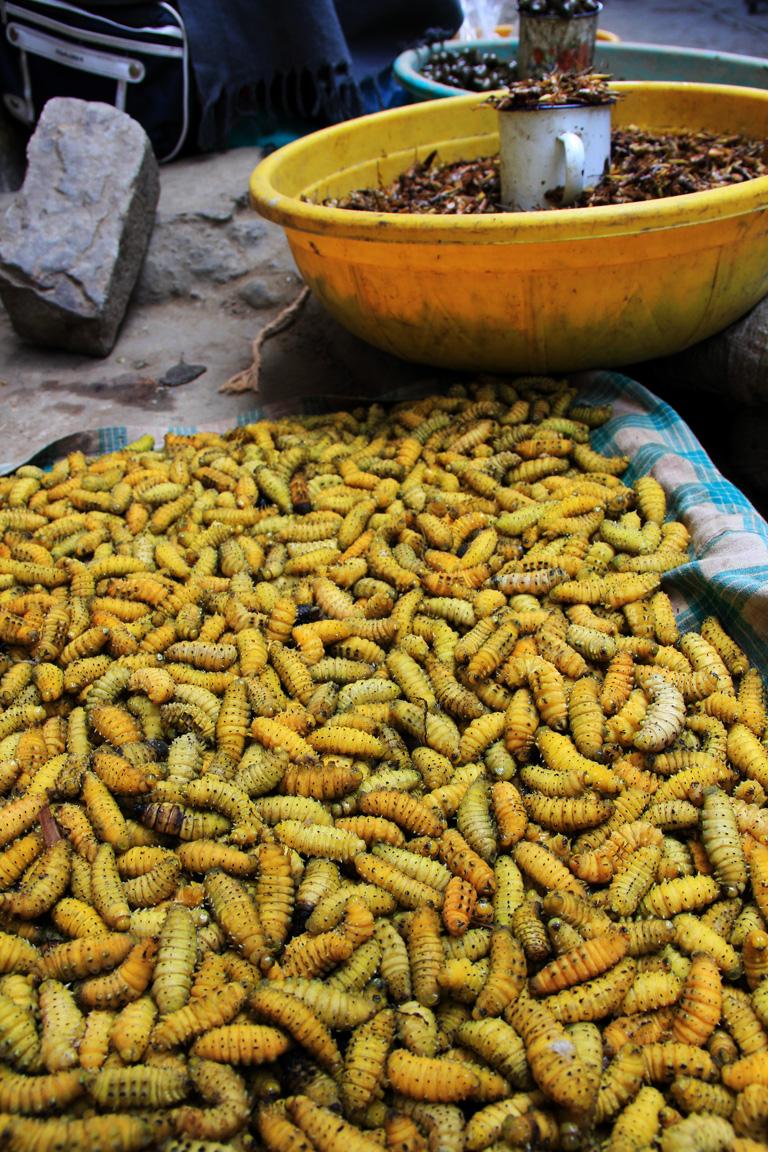 crickets in Kohima