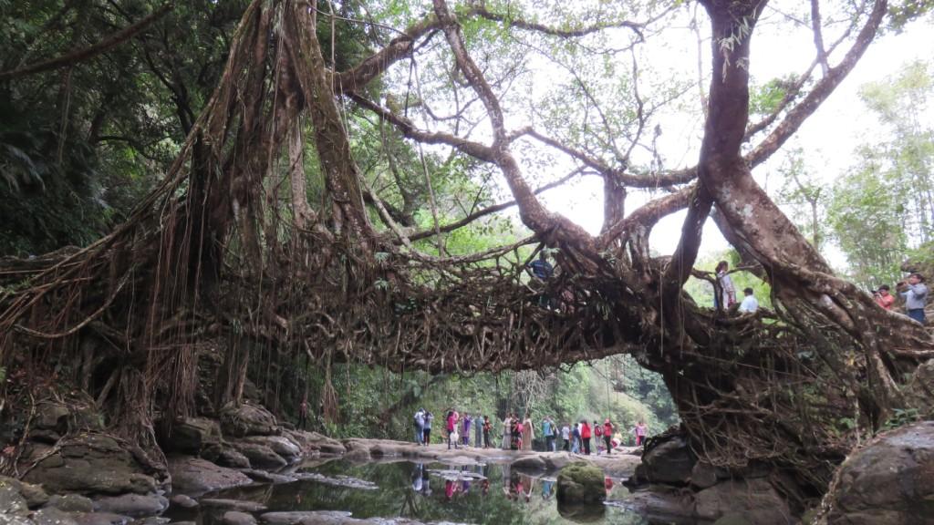 living root bridge riwai mawlynnong