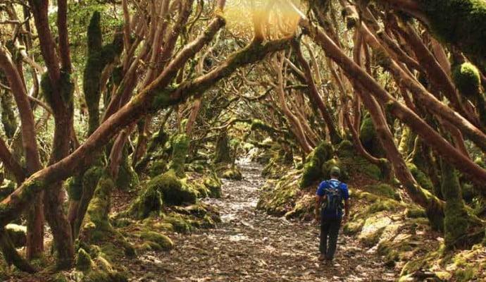 Monpa Trail West Arunachal Trek